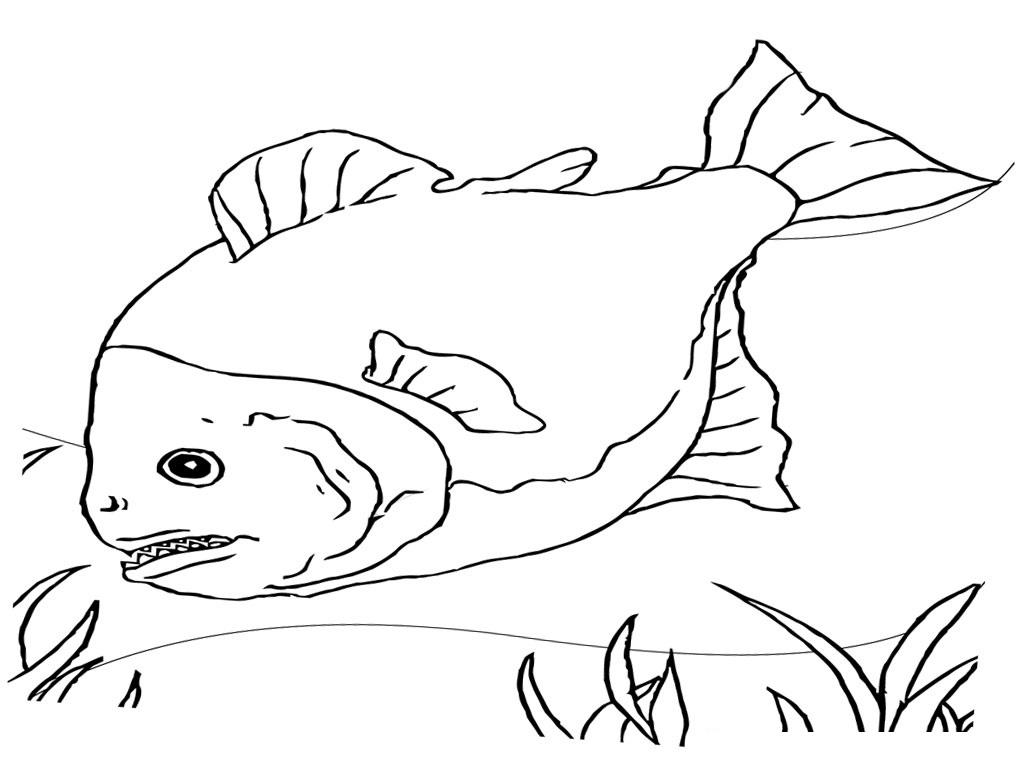 Printable Coloring Pages Fish - Democraciaejustica