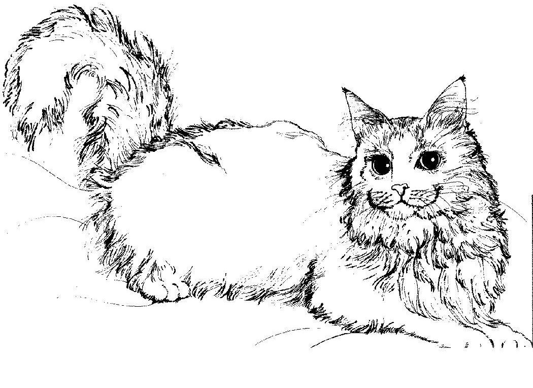 Warrior cat coloring games -  Warriors Cats Coloring Pages Download