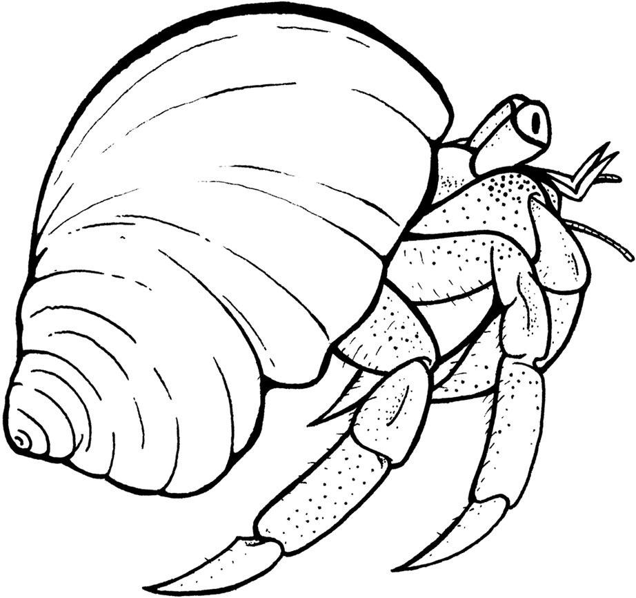 Hermit Crab Coloring Page - Eskayalitim