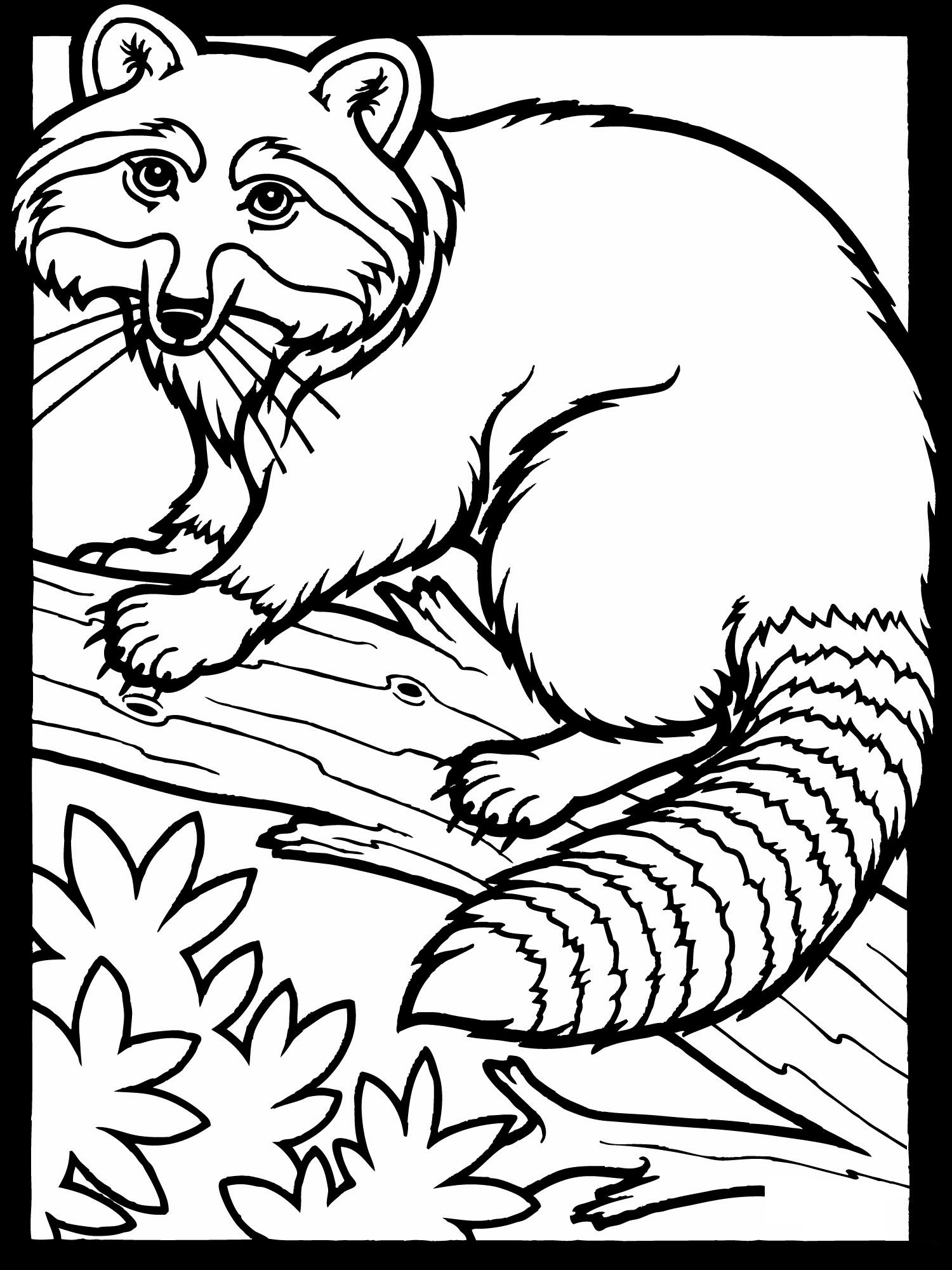 Raccoon coloring pages free printable