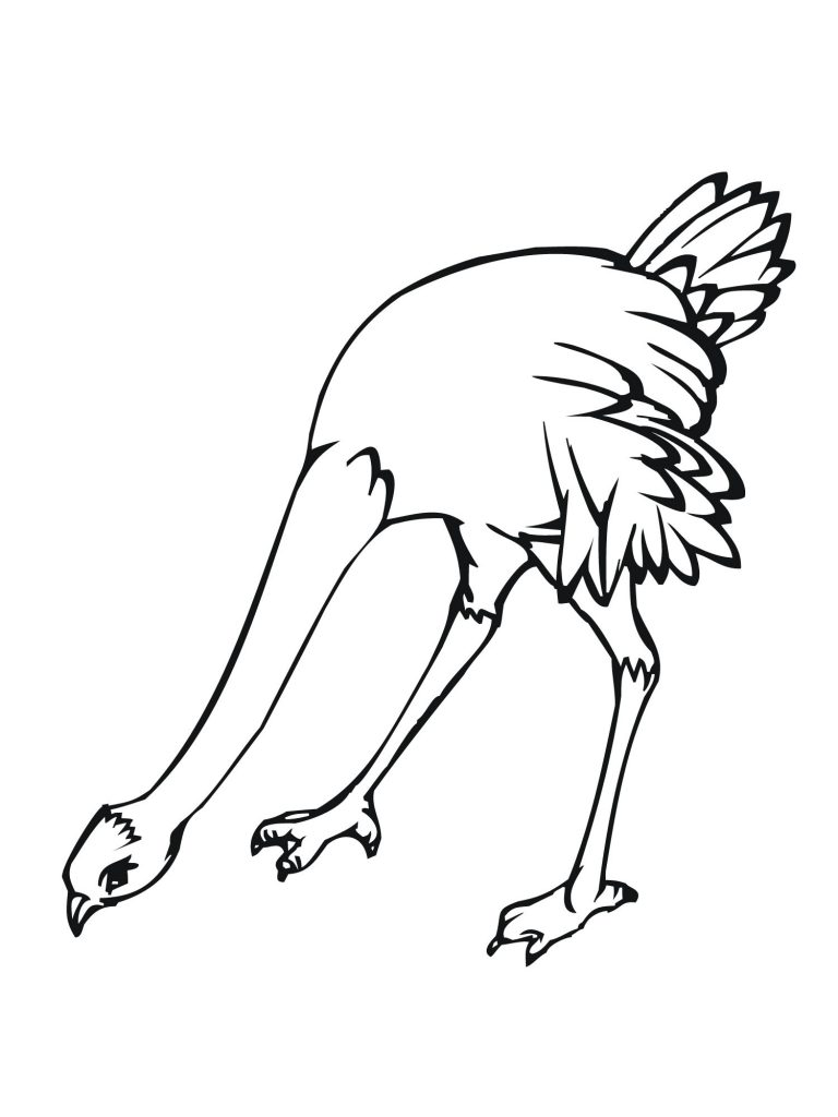 avestruz dibujo para colorear