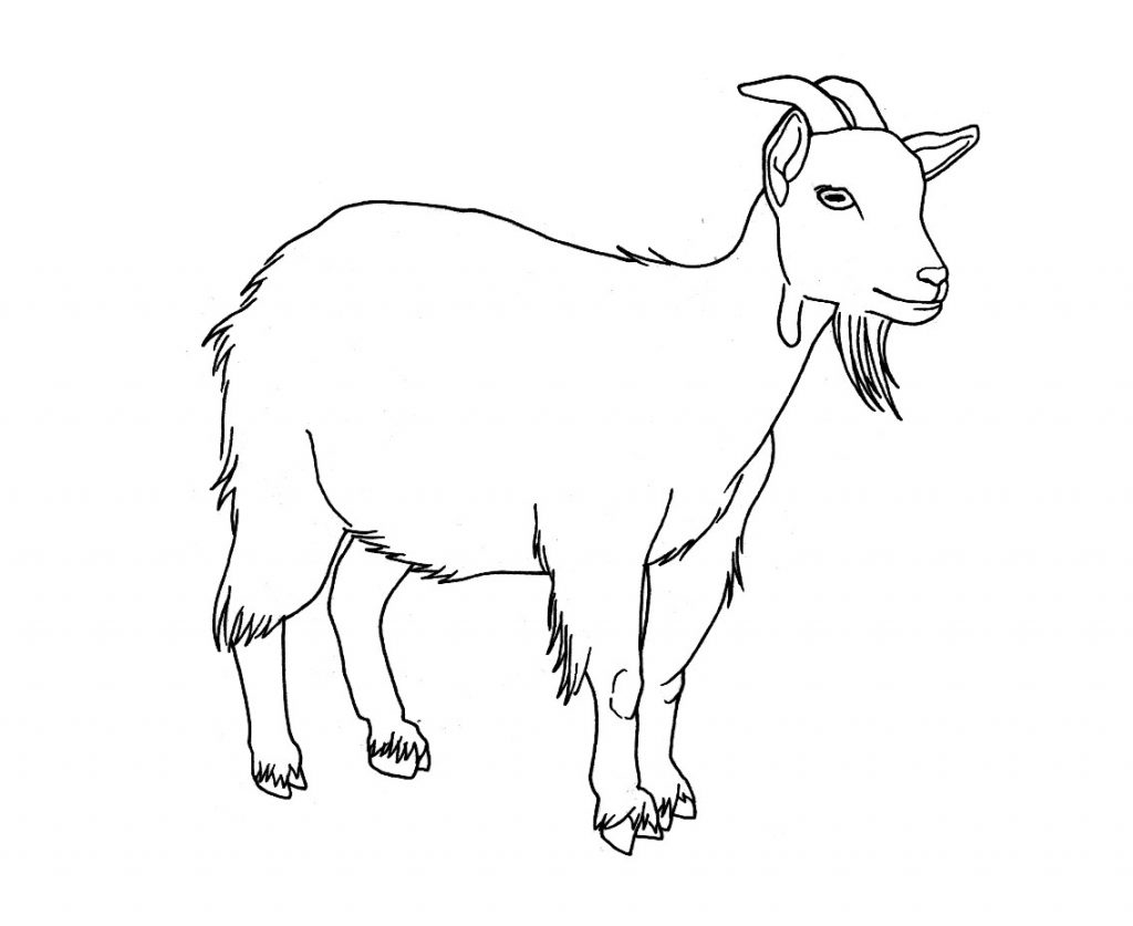 Free Printable Goat Coloring Pages For Kids SaveEnlarge
