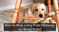 Home Remedy to Stop Dog From Chewing Wood - Basic Guide