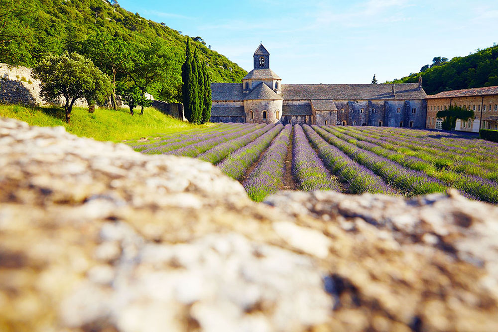 Abbaye de sénanque, lavande en fleur