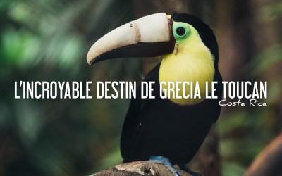 COSTA RICA | L'INCROYABLE DESTIN DE GRECIA, le Toucan mutilé devenu l'icône de tout un pays