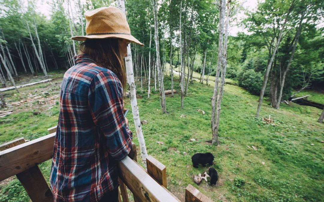 canada voir des ours en liberté