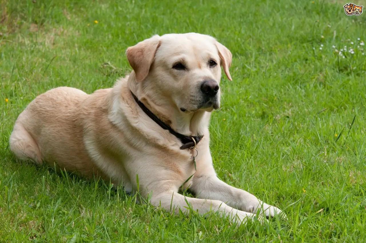 Fullsize Of Friendliest Dog Breeds