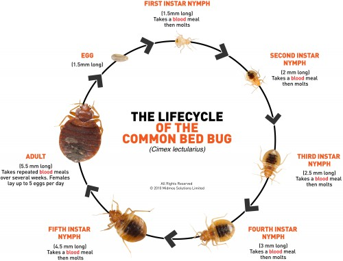 spider mite lifecycle