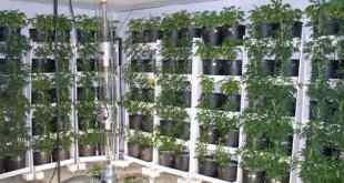 Soil Vertical Garden