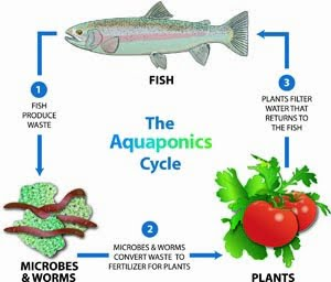 Aquaponic Gardening Made Easy