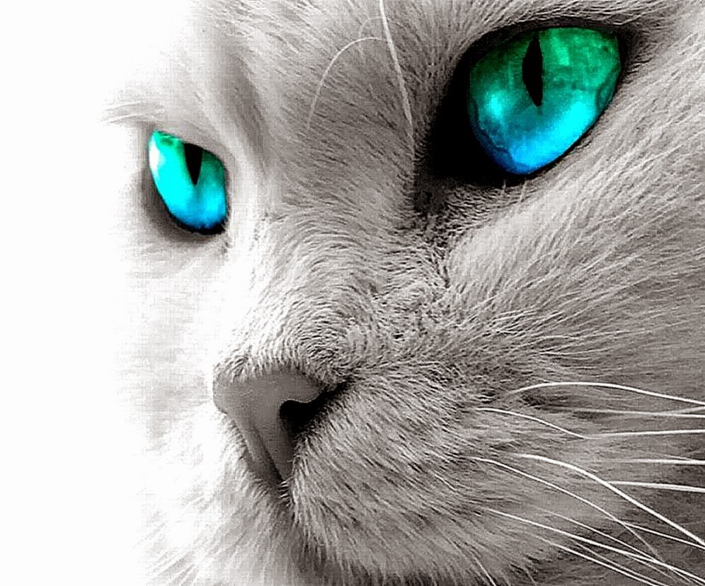 Cute White Rabbit Wallpapers For Desktop Animated Cat Hd Wallpapers 2017
