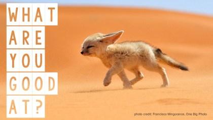sahara-desert-fox