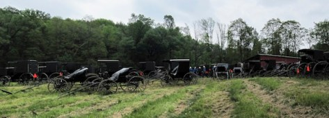 Amish Buggies @ Auction