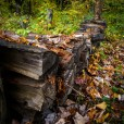 Wood pile under leaves