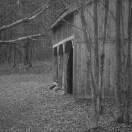 Doe behind barn
