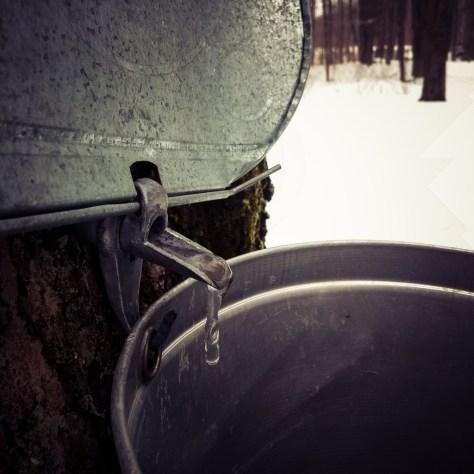 Frozen Maple tap