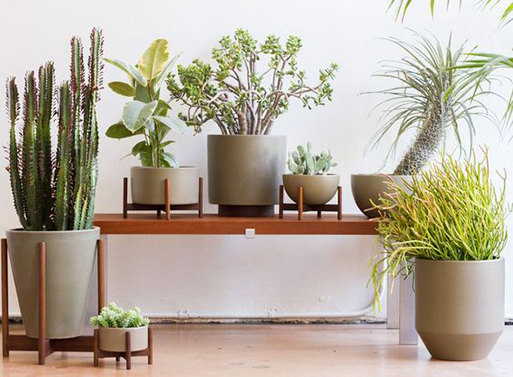 Case Study Planters
