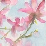 Pink Magnolias Blue Sky