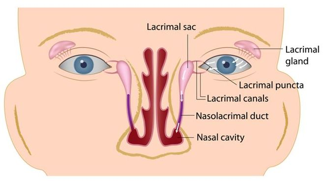 The Lacrimal System - Beverly Hills Sinus Center