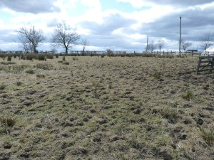 April 2013, our top field. The area to the right along the fence was selected for our second grain-growing attempt.