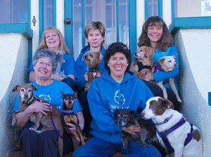 http://www.peaceofminddogrescue.org img