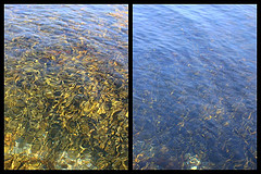 Showing how a Polarizing filter makes reflections disappear from water
