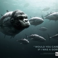 Seen and noted: WWF campaign for Bluefin Tuna