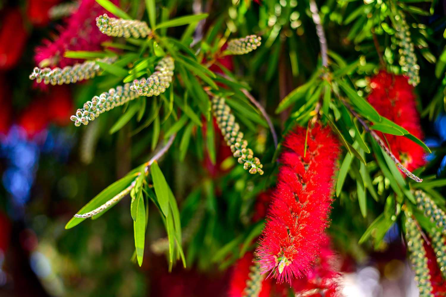 native trees and flowers