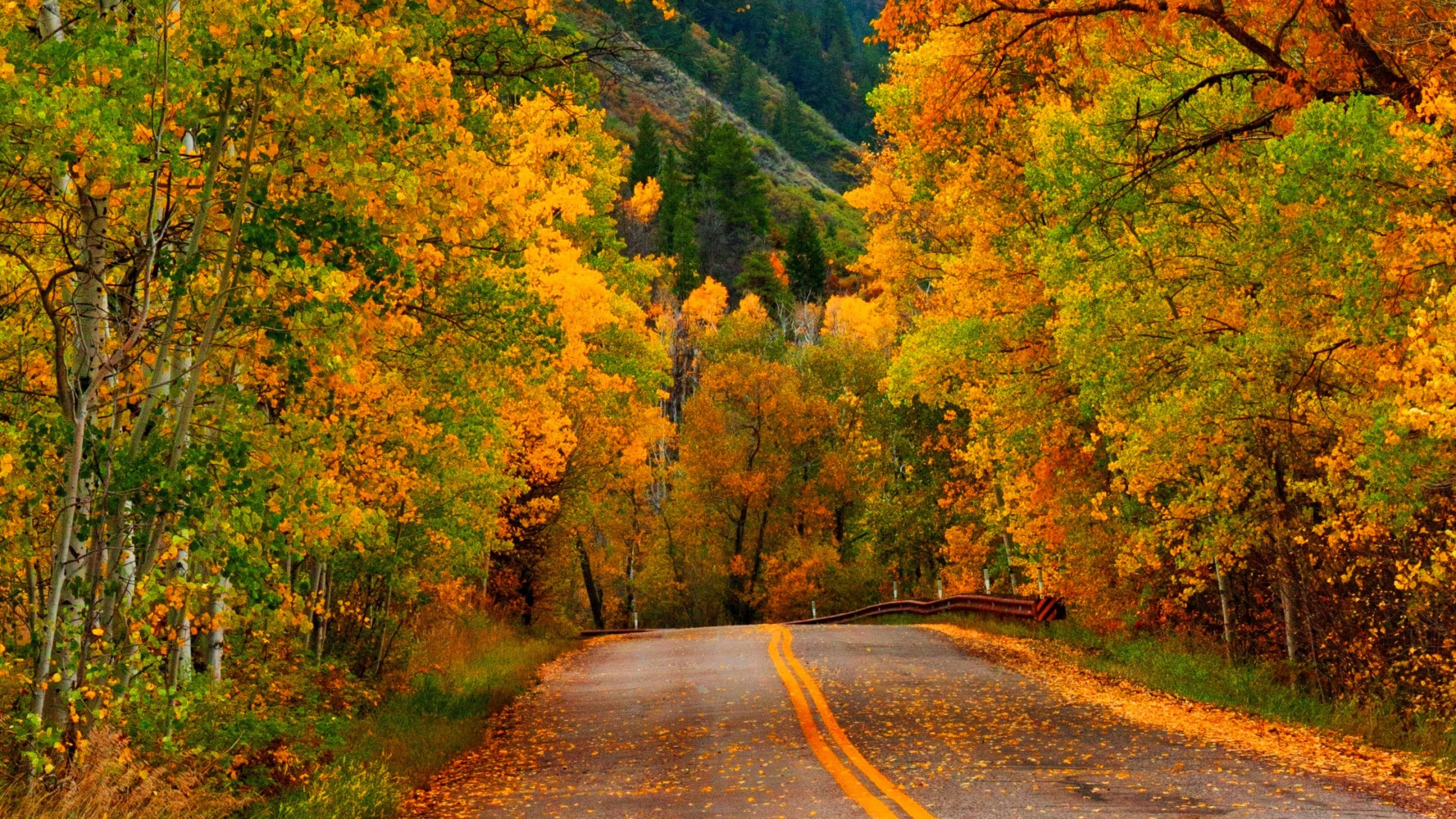 Fall Forest Wallpaper Nature Autumn Forest Park Road Wallpapers 2560x1440
