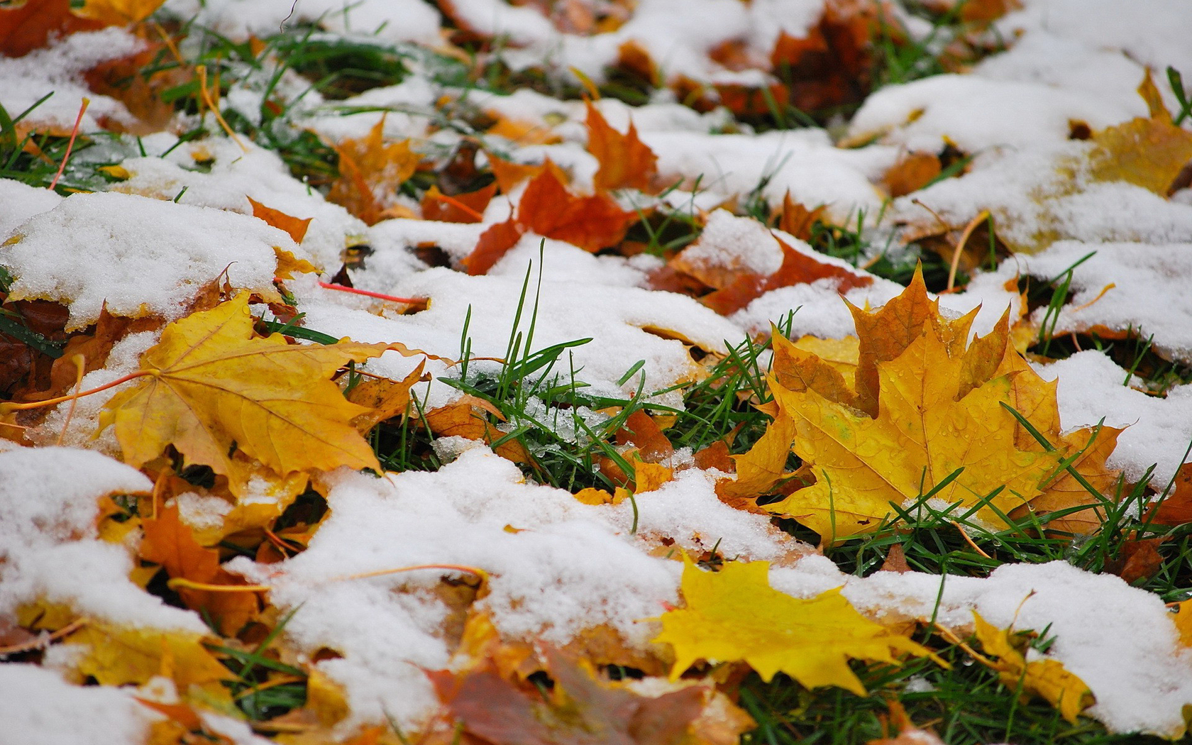 Hd Fall Wallpaper Backgrounds Snow On Autumn Leaves Wallpapers 1680x1050 1739233