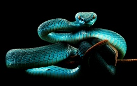 Snake Eyes Hd Wallpapers Snake Hd Wallpapers Free Wallpaper Downloads Snake Hd