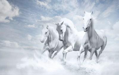 Three White Horses Running wallpapers
