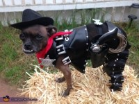 40 Adorable DIY Pet Costume Ideas for Halloween