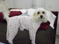 Pajamas For Big Dogs - Big and Small Dog Boutique