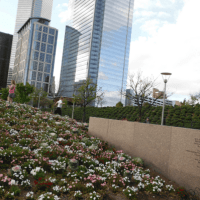 What You Don't Know about Discovery Green! 5 Things that May Surprise You!