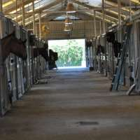 Visit the Houston Police Department Mounted Patrol Stables