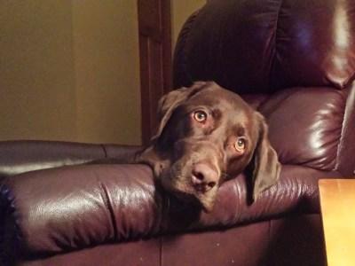 Save My Dog Odin