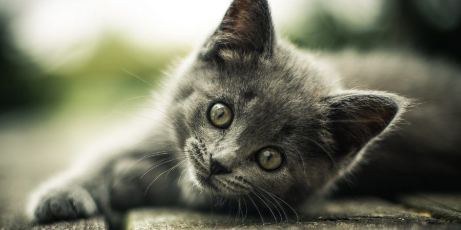 Cute Wallpapers Of Kittens And Puppies Perch 233 Il Gatto Mi Fa L Occhiolino Bigodino