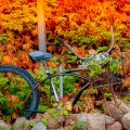 Fall Bike Poster by Arizona Parrot via Flickr