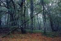 Bildarchiv Boden