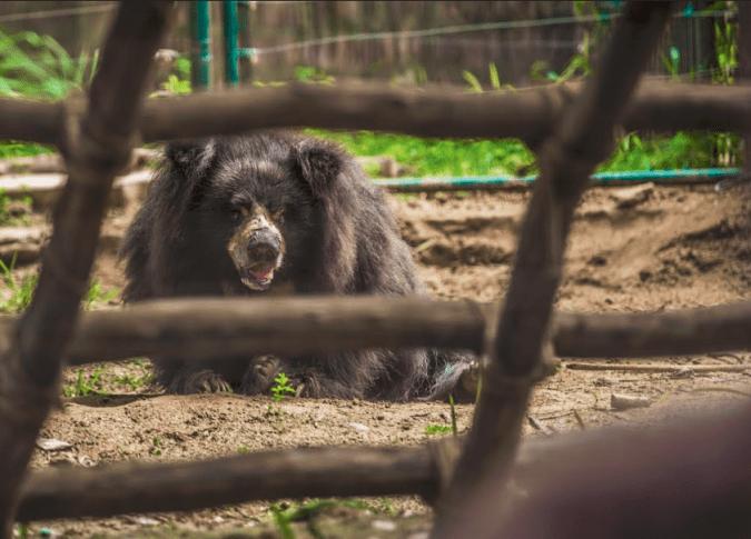 SOS bear