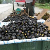 Dabai, the Sarawak Olive