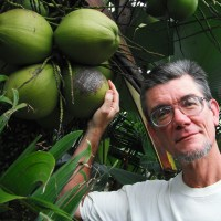 Tall Coconuts & Their Harvestation