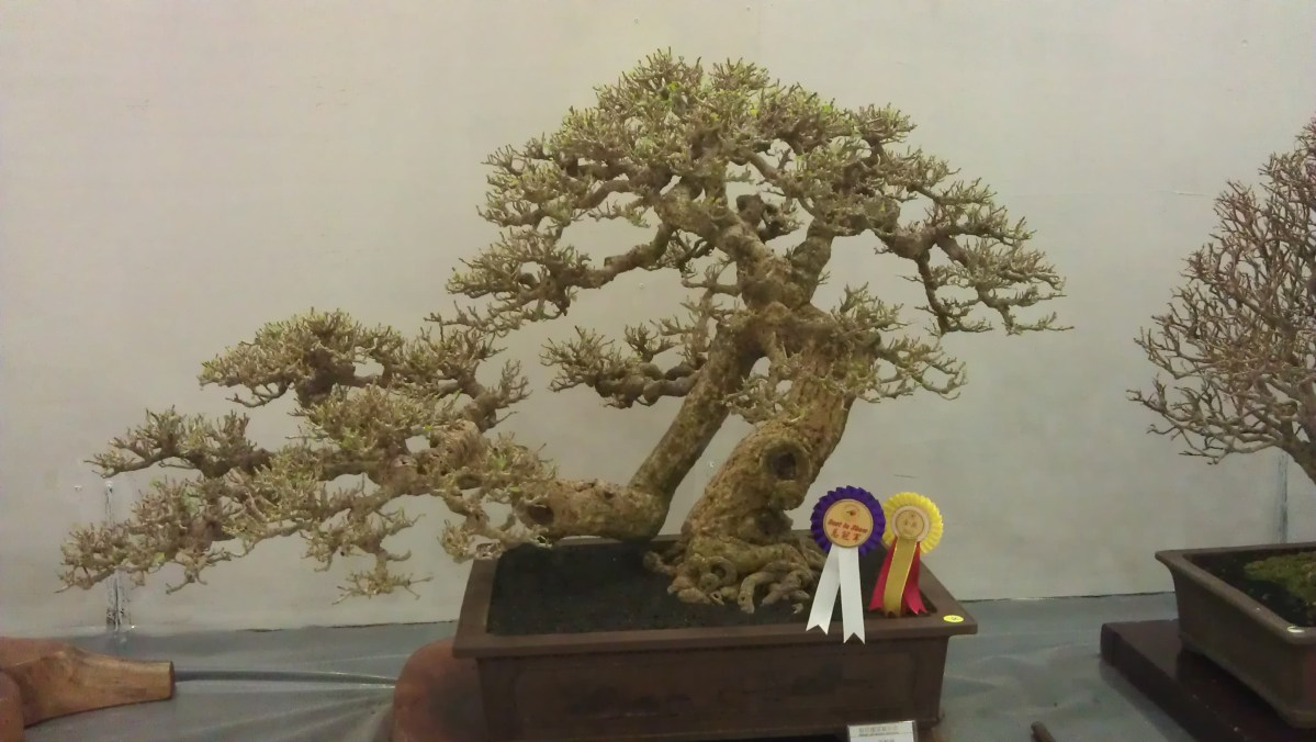 Sarawak Bonsai Competition