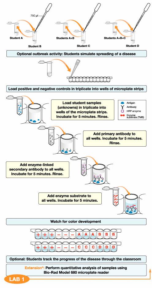 ELISA Immuno Explorer™ Kit Life Science Education Bio-Rad