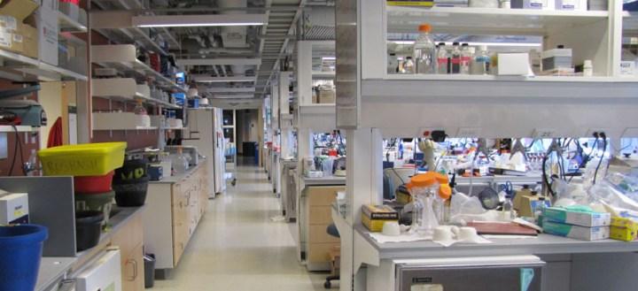 Rosbash Lab