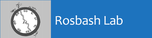 Rosbash Lab Logo