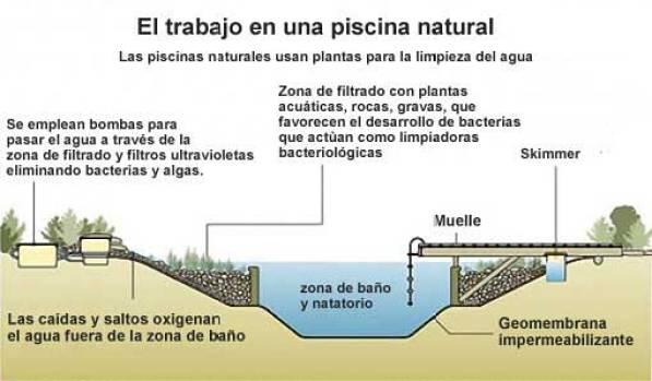 Piscinas ecol gicas o naturales una buena opci n bioark - Diseno de piscinas naturales ...