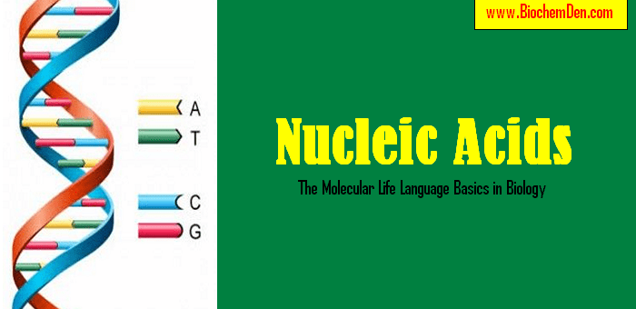 Nucleic Acids : The Molecular Life Language Basics in Biology