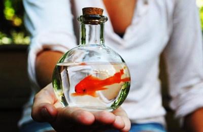 BioEcoGeo_petizione pesci rossi
